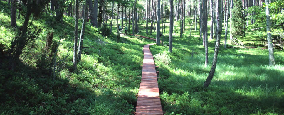 The Didactic Path over Lake Jeleń in the Tuchola Woods National Park