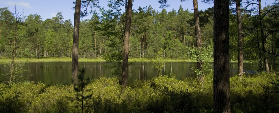 Lake Jeleń in the Tuchola Woods National Park